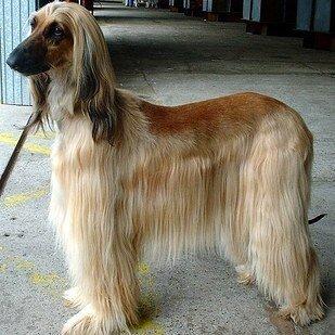 22 невероятных факта о собаках  1_1403464265_19-1