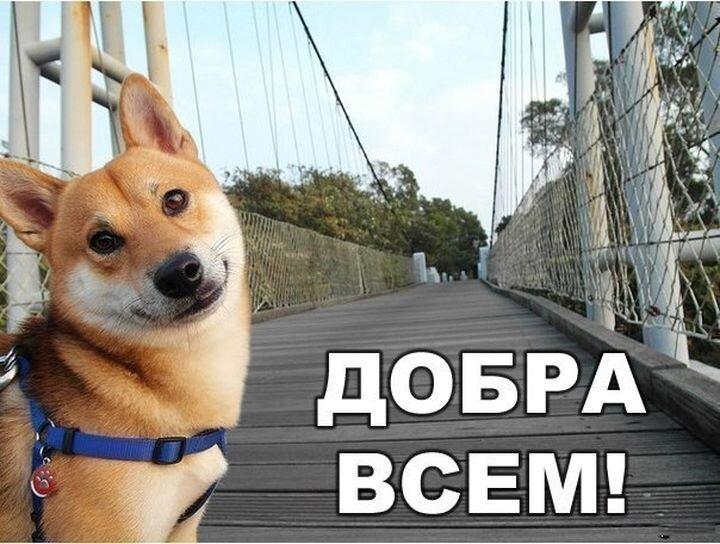 22 невероятных факта о собаках  Sc2mf