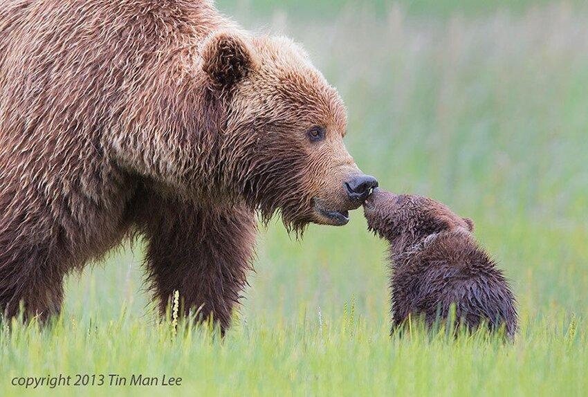 25 очаровательных примеров родительской любви 6218c28e68641782f75f1d8b81cc1d34