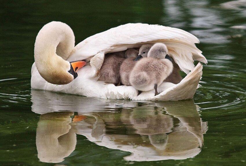 25 очаровательных примеров родительской любви B82f02c8c713425e3c9d9a70082268c0