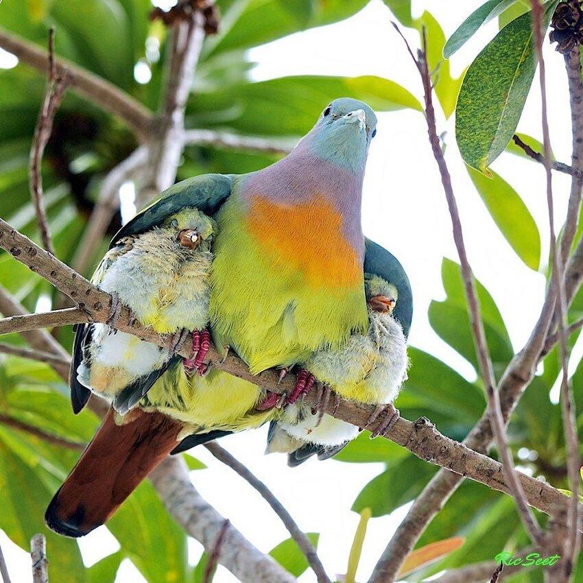 25 очаровательных примеров родительской любви C4bf9913c3f65e8e328fe7f0810616db