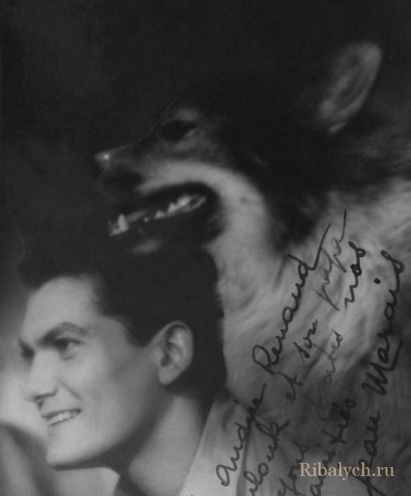 Его любили женщины, а он любил собак  1_022