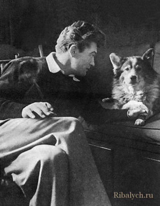 Его любили женщины, а он любил собак  1_026