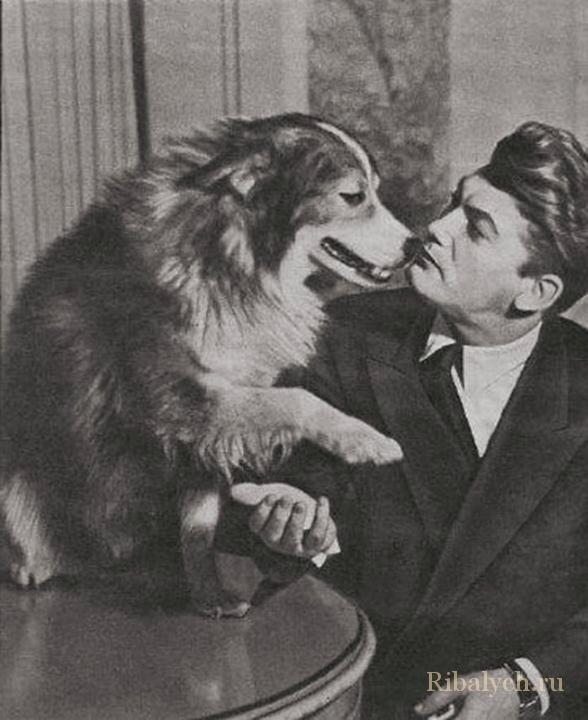 Его любили женщины, а он любил собак  3_016