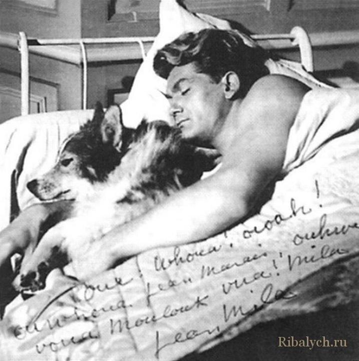 Его любили женщины, а он любил собак  3_019