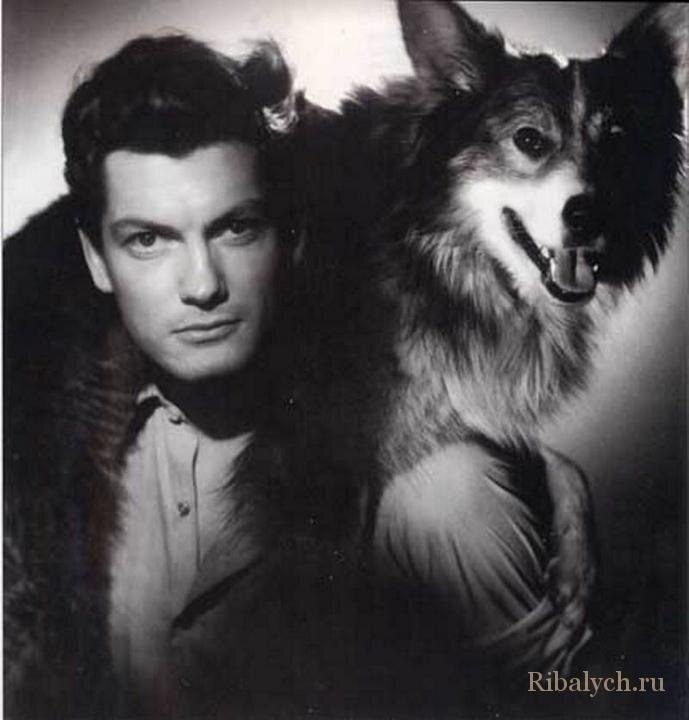 Его любили женщины, а он любил собак  6_011