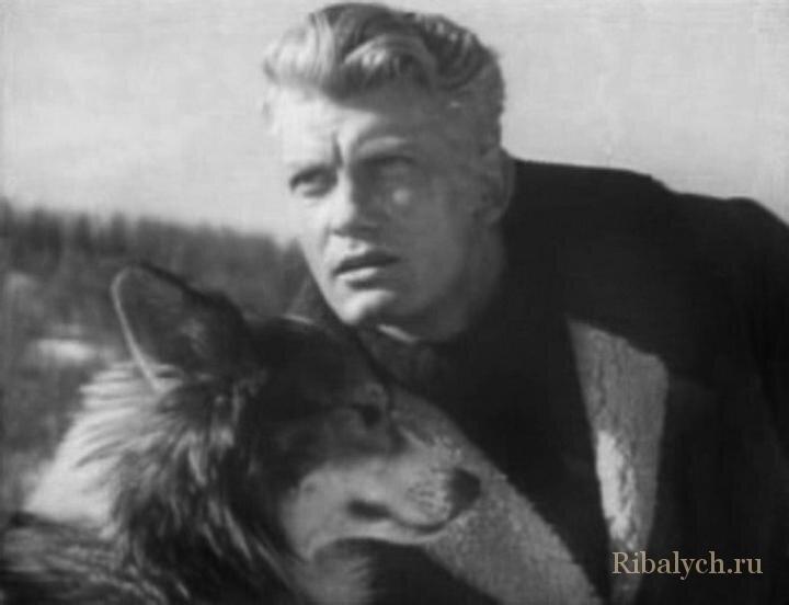Его любили женщины, а он любил собак  6_013