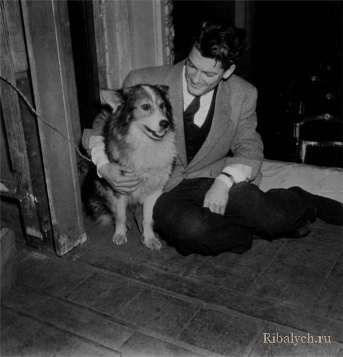 Его любили женщины, а он любил собак  7_007