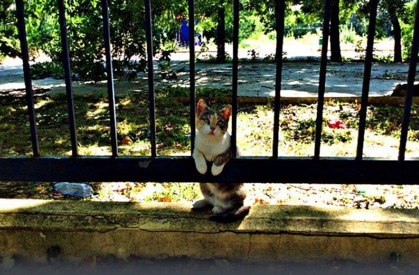 Кошка два года ждет возвращения хозяина 3703210