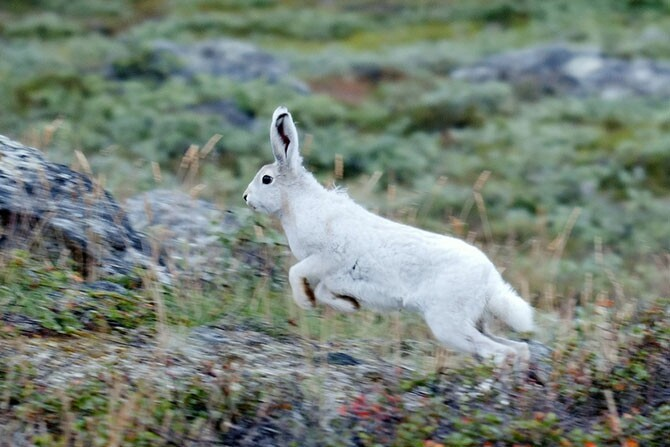 30 лучших фотографий природы, сделанных исследователями 465285a8490b50403117644c6b9def8c