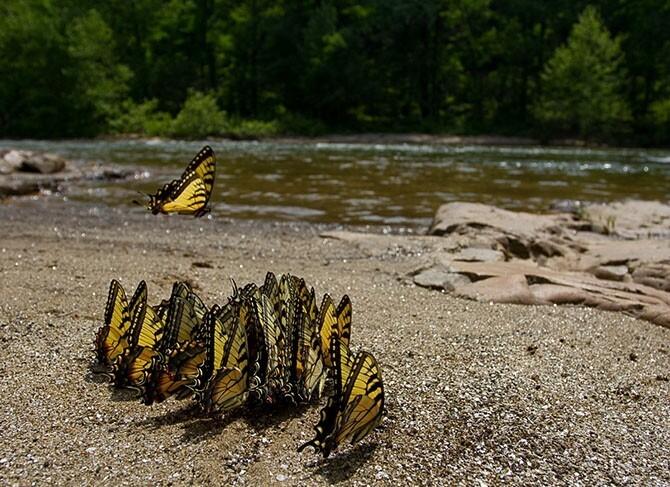 30 лучших фотографий природы, сделанных исследователями B860f8f02547ae35775944c69dd3ef2e