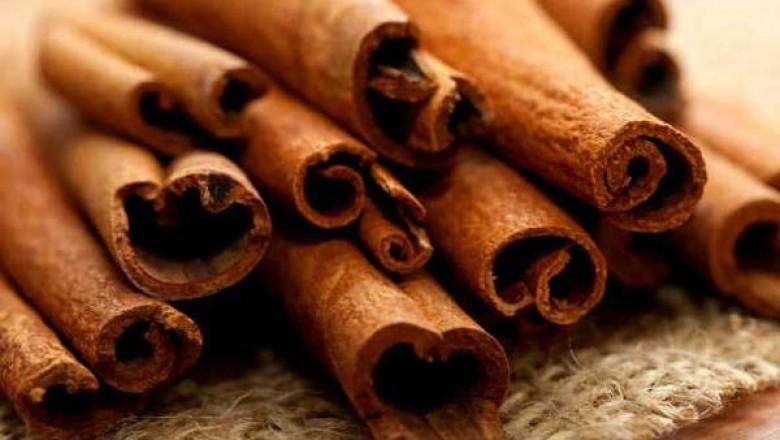 TÌNH YÊU CÂY CỎ  - Page 9 Re-do-Cinnamomum%20tetragonum%20A.%20Chev.-2071