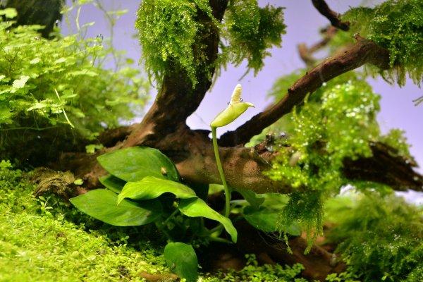 Green Dream  (nouvelles photos page 9) - Page 2 21b524b2-d3aa-4a9b-9b1b-501bb8973ed3