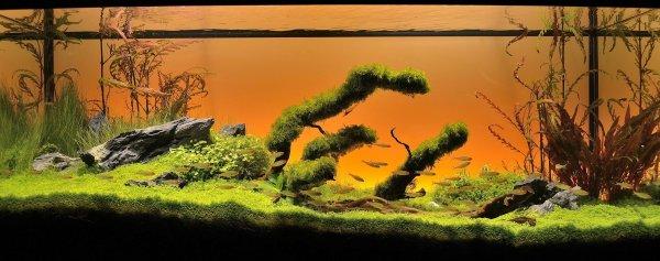 Green Dream  (nouvelles photos page 9) - Page 5 21dc7c82-0aae-40a8-a1df-bb57114c2cb2
