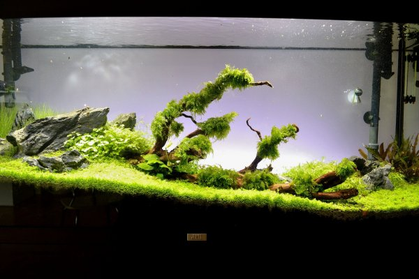 Green Dream  (nouvelles photos page 9) - Page 2 72180519-6858-4c28-a069-df041b020f10