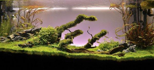 Green Dream  (nouvelles photos page 9) - Page 5 Dc33f9c0-3ace-46ec-bc5f-fdf95be4d98f