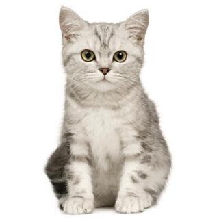 Необычные и редкие породы кошек и собак 2-k
