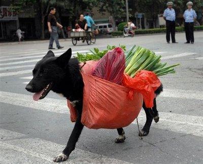 Dvoboj slika  - Page 4 1268370341_funny-animal-photos-dog-shopping