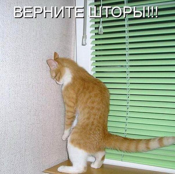 Кошачий юмор - Страница 6 1323517476_21_resize