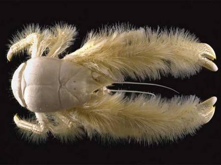 Двадцатка самых необычных животных Crab_eti