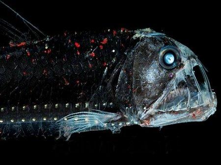 Двадцатка самых необычных животных Riba_gadyka