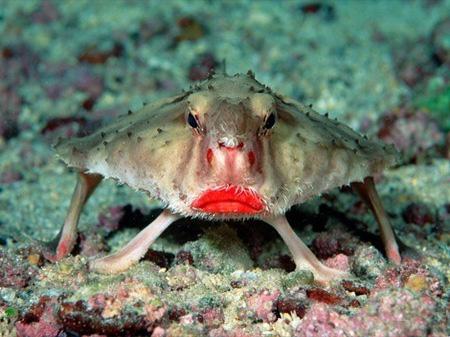 Двадцатка самых необычных животных Riba_red_lips