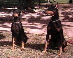 Les chiens célèbres - Page 2 Magnum09