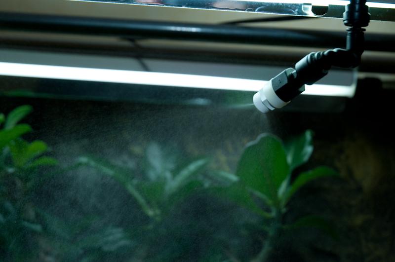Exemple Terrarium Astrochelys Radiata V2 030