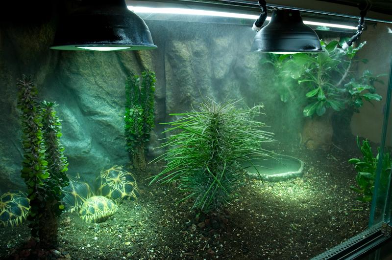Exemple Terrarium Astrochelys Radiata V2 031