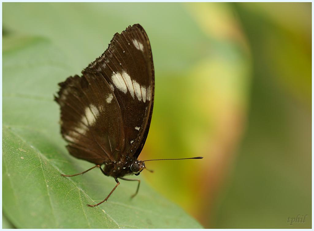 La serre aux papillons la queue en yvelines - Page 3 IMGP0609R