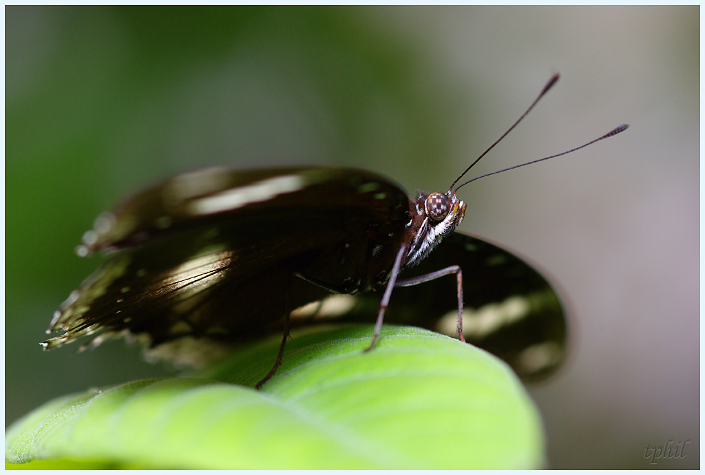 La serre aux papillons la queue en yvelines - Page 3 IMGP0625R