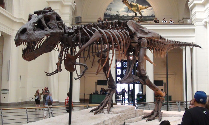 Dinosaur Hoax - Dinosaurs Never Existed! Sue_trex