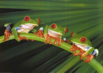 Три лягушки или о реальном действии Lj0671
