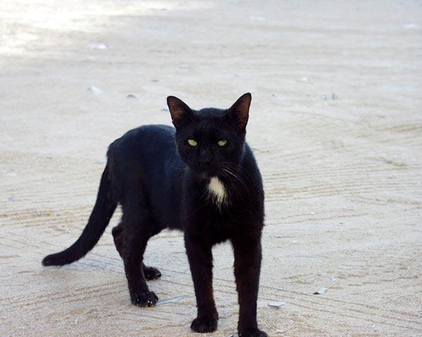 صور قطط جميلة Egypt-cat