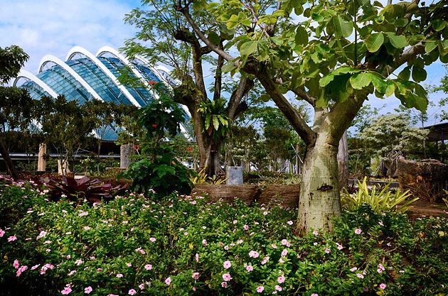 Gardens by the Bay _op_wop_gallery_14
