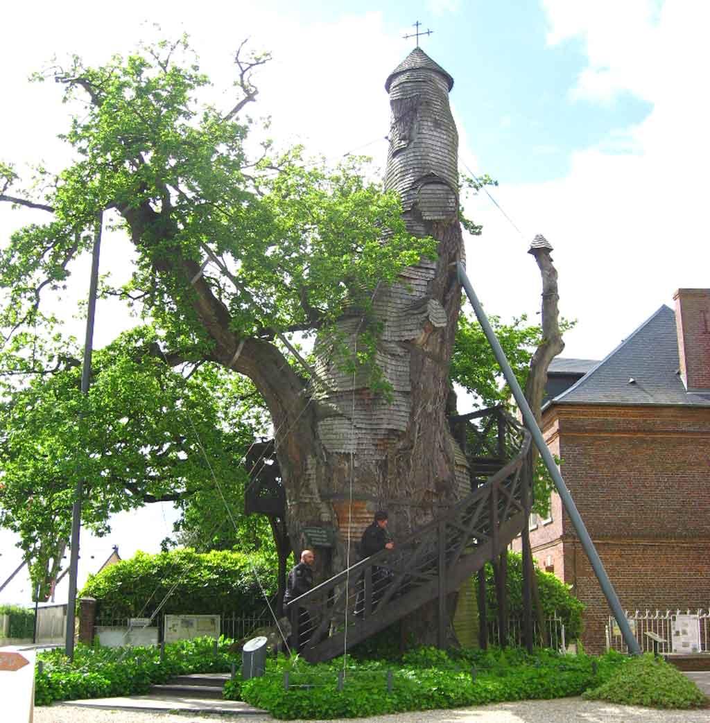 le mystère de bois de Martin trouvé par Martine  12-06-03-16H00