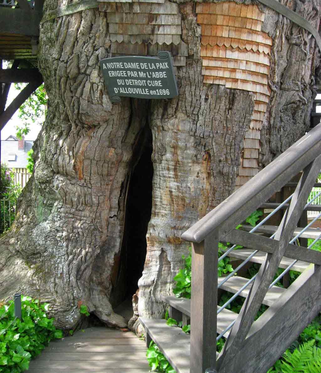 le mystère de bois de Martin trouvé par Martine  12-06-03-16H01