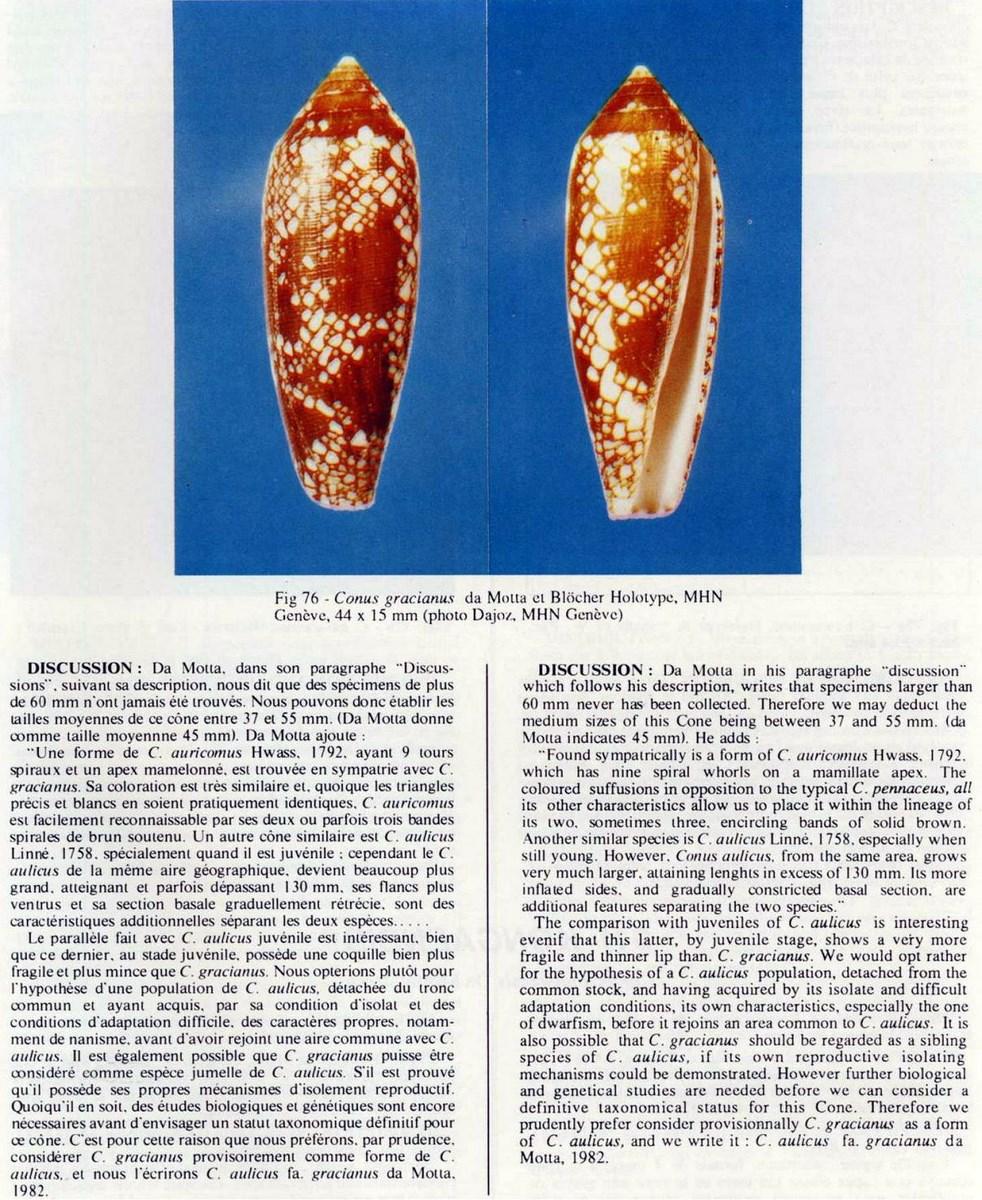 Conus (Darioconus) aulicus f. gracianus (da Motta, 1982) Conus%20gracianus_html_1b17de4a