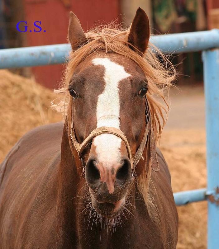 Death_on_horse parduodami zirgai 20262_b