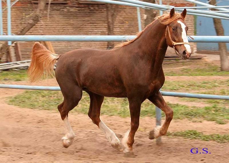 Death_on_horse parduodami zirgai 20263_b