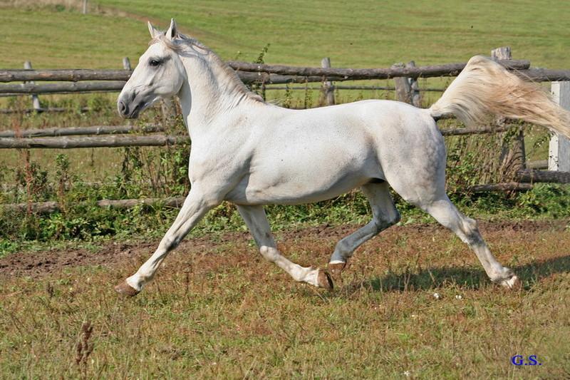 Death_on_horse parduodami zirgai 22202_b