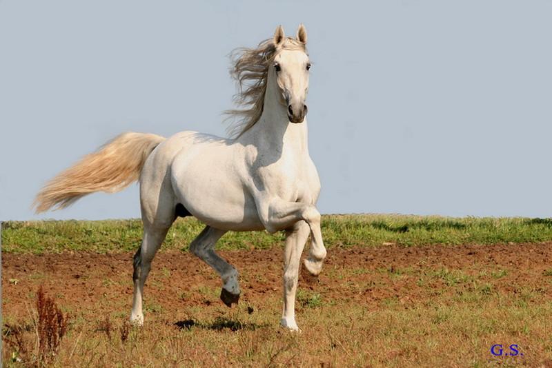 Death_on_horse parduodami zirgai 22204_b