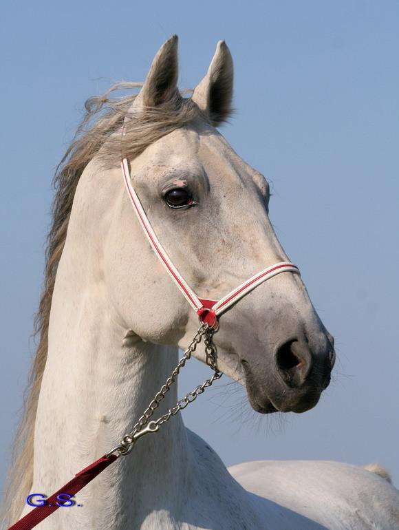 Death_on_horse parduodami zirgai 22205_b