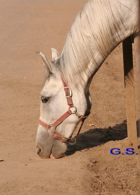 Death_on_horse parduodami zirgai 22881_b