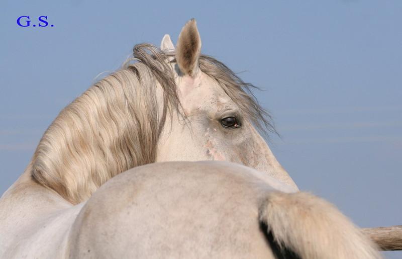 Death_on_horse parduodami zirgai 22883_b
