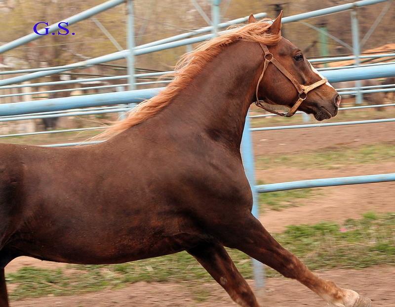 Death_on_horse parduodami zirgai 22981_b