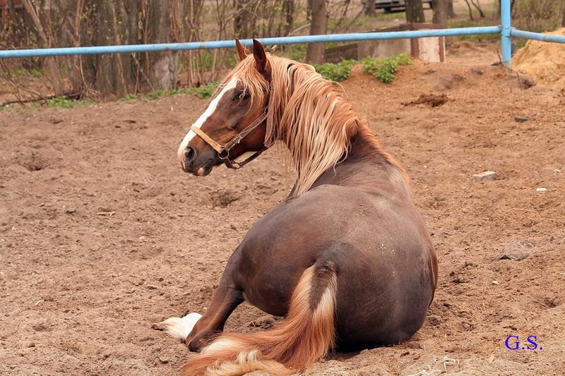 Death_on_horse parduodami zirgai 22984_b