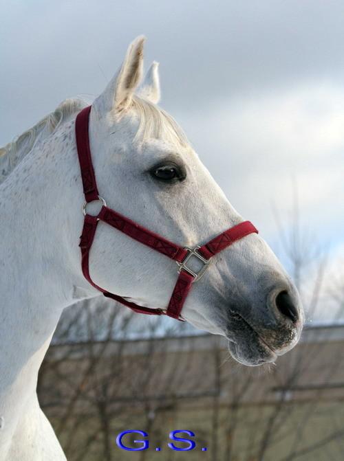 Death_on_horse parduodami zirgai 23664_b