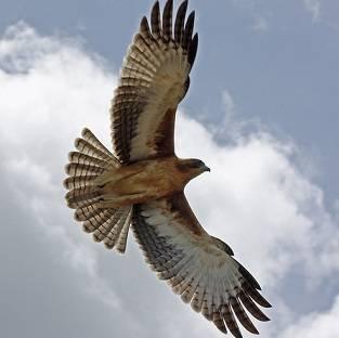El optimista decide no rendirse Aguila