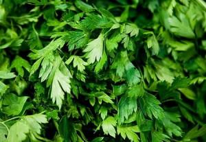 зелень на огороде Petrushka1-300x207